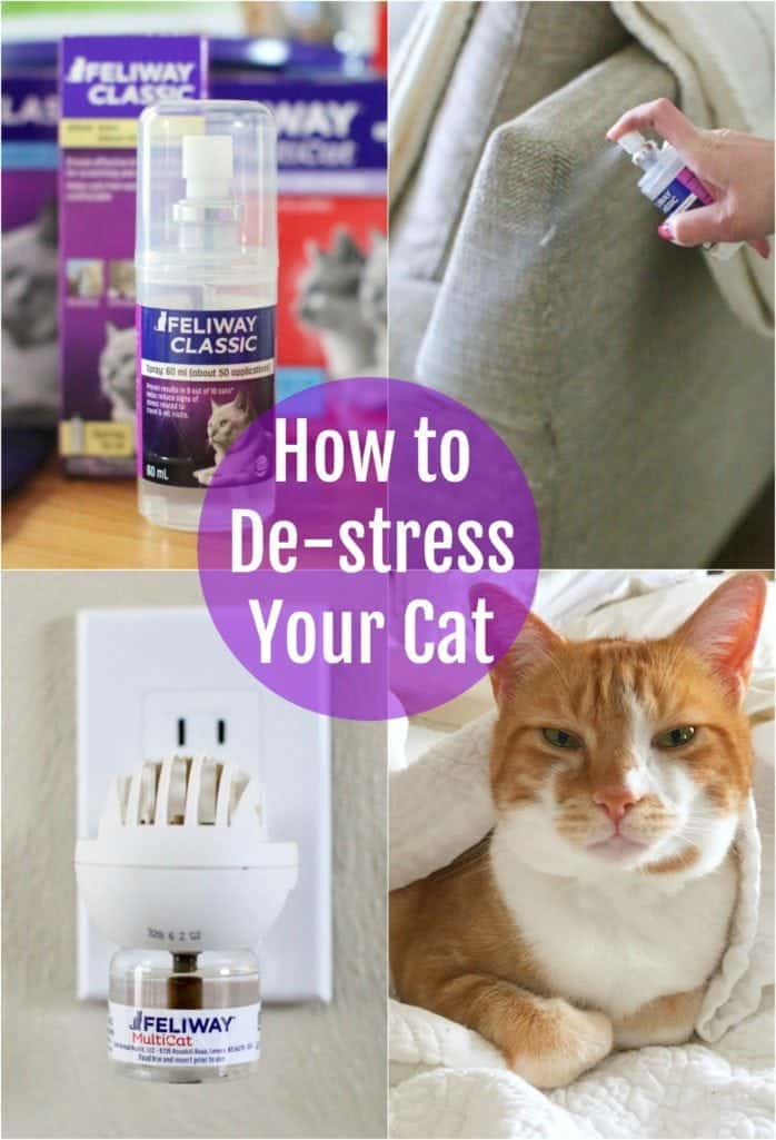 How to: De-stress your cat naturally