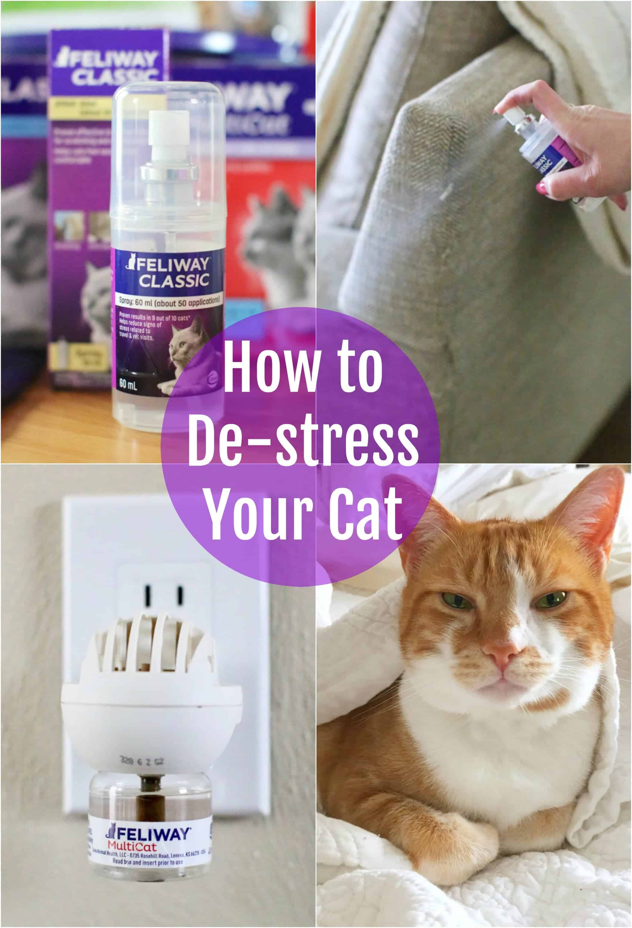 How to: De-stress your cat naturally and safely. #cats #cat #howto #relax #scratching #biting #spraying #training #natural #pets