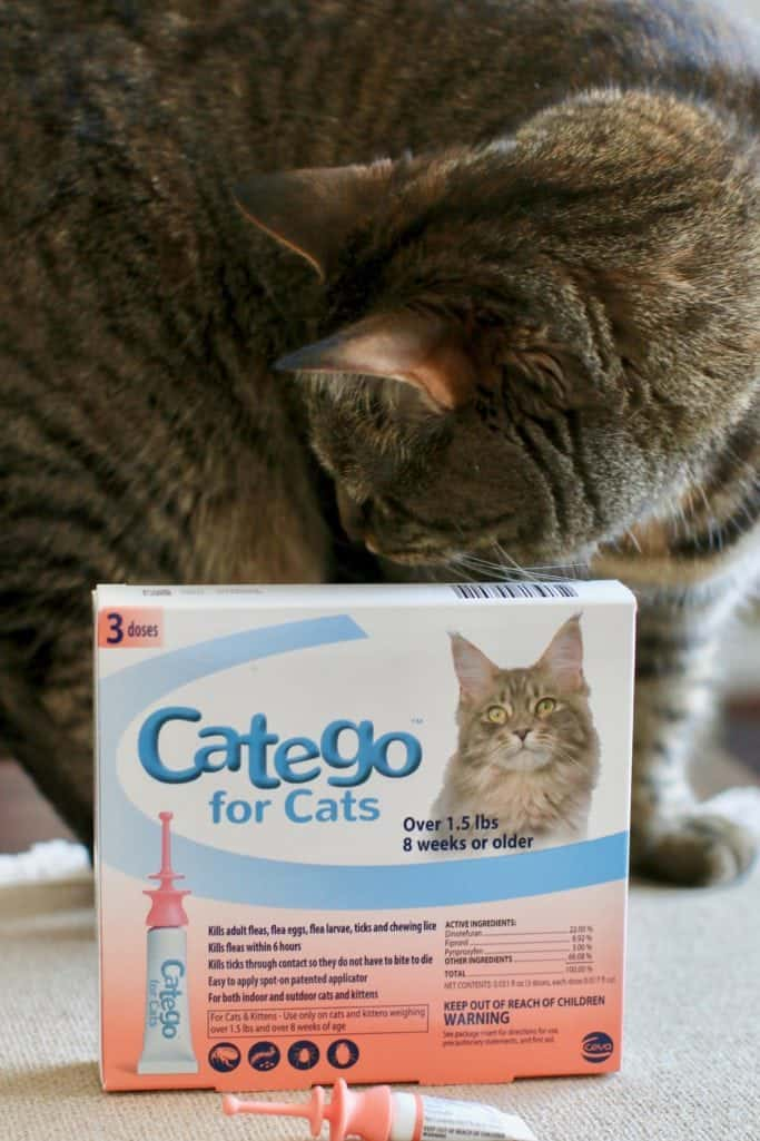 How to protect your cat from fleas with Catego Cat Flea Treatment