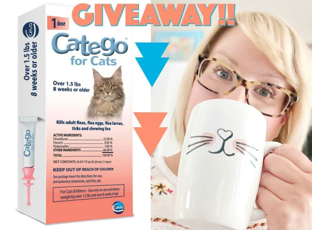 CATEGO Giveaway Graphics