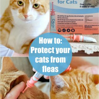 How to- Protect your cats from fleas and ticks