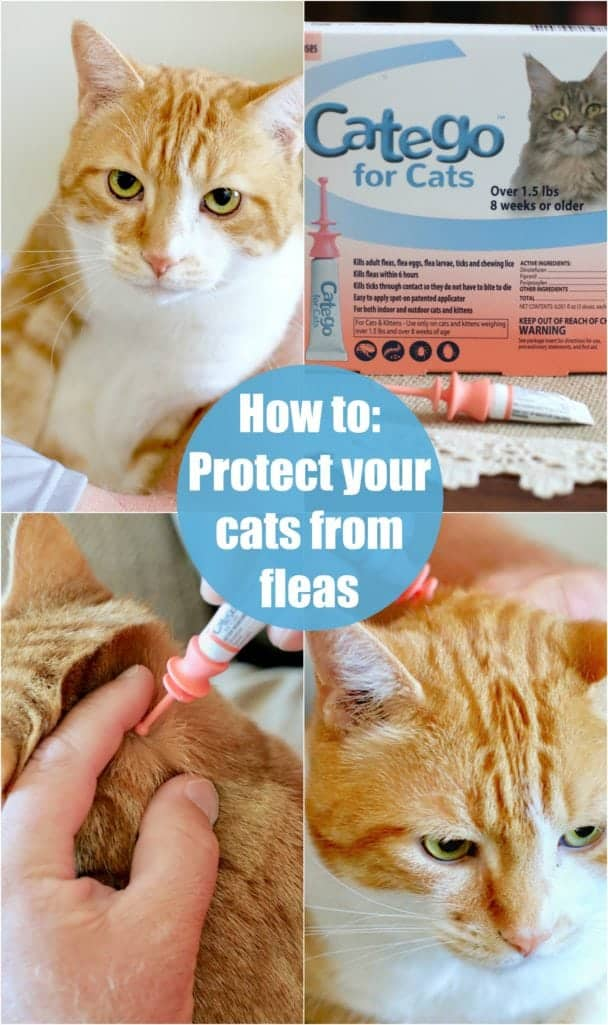 How to: Protect your cats from fleas, ticks and lice #cats #cat #pets #fleas #ticks #protect #animals