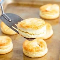 a cream biscuit shown on a silver spatula and being held over a baking sheet of baked biscuits