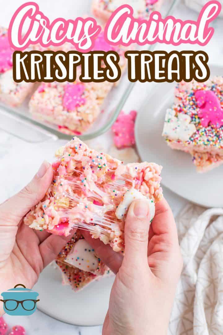Hand pulling apart one Circus Animal Krispie Treat apart showing the marshmallow Pinterest image